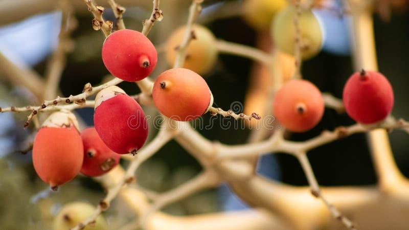 Unique fruit, palm fruit like egg, for easter idea concept design. Beautiful fruit stock photos