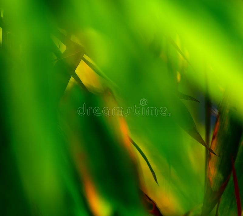 Unique green abstract illuminated blurred background photograph. A beautiful green coloured objects illuminated blurred abstract background stock photograph stock photo