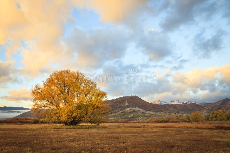 Dramatic golden fall field in the Utah mountains, USA. stock images
