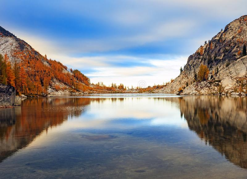 Dramatic golden larches in the Washington mountains, USA. stock photography
