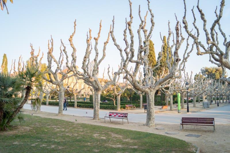 Unique looking dry trees in the Ciutadella Park or Parc de la Ciutadella in Barcelona, Spain. The unique looking dry trees in the Ciutadella Park or Parc de la royalty free stock image