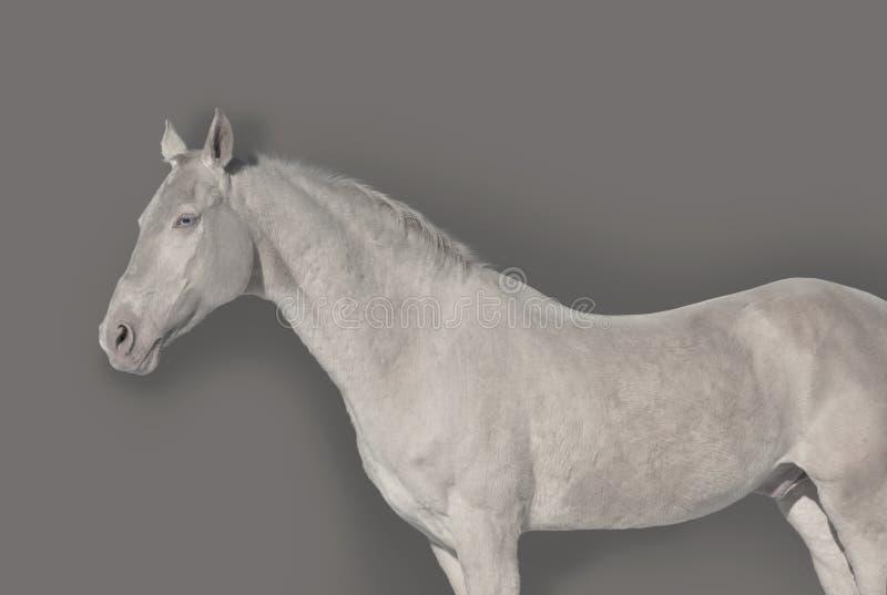 Unique Stallion stock images