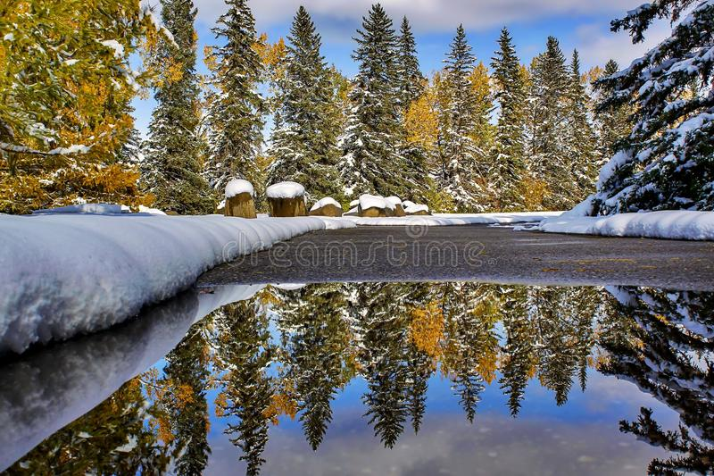 Snowy Trees Puddle Reflections. A unique view of a row of snow covered trees reflecting into a puddle of water stock images