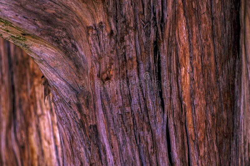Unique wooden texture, natural bark pattern. Close up photo of  beautiful tree bark. You may see quite detailed deep brown tree bark or skin with beautiful stock photography