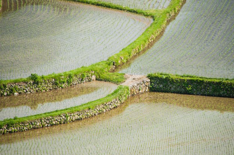 Closeup of terraced rice fields in Japan. Uniquely curved terraced rice fields seen in Wakayama prefecture, Japan royalty free stock photography