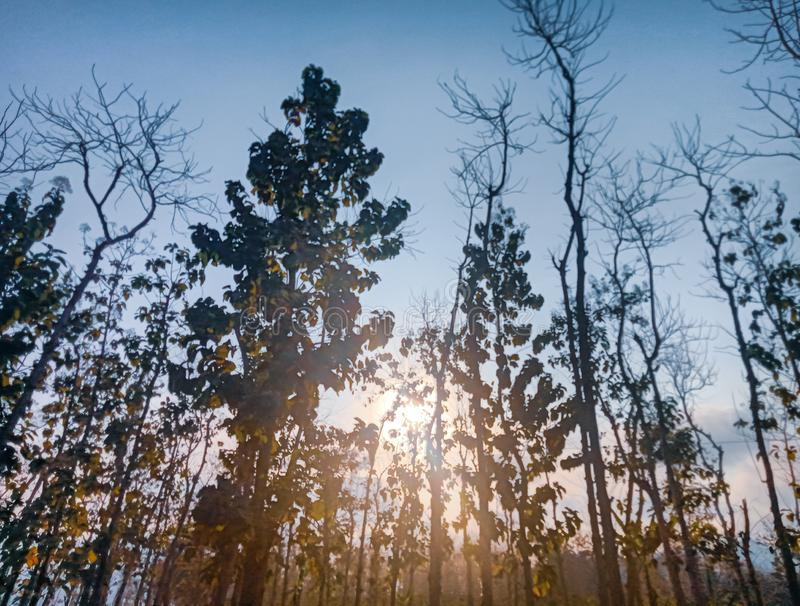 The uniqueness of the trees in the afternoon. Beautyful photos ,the uniqueness of the trees with sun shineThis photo has taken in the night stock photography