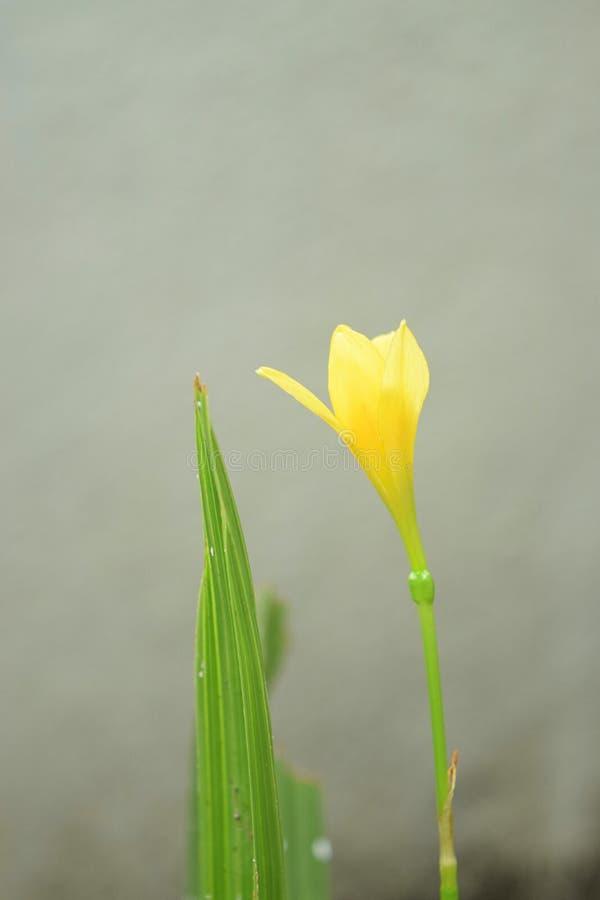 Unité d'une fleur et d'une feuille - un duo inséparable photographie stock