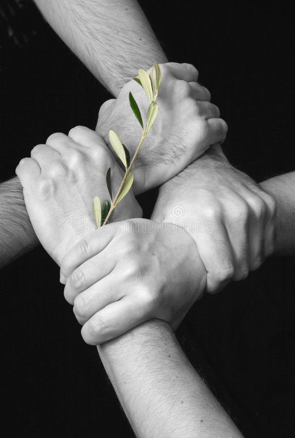 United in peace. Four male hands linked(black and white),green olive branch