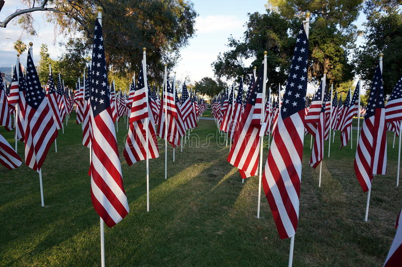 United States Flags. Memorial Day Holiday. United States Flags lined up on grass in a park honoring war veterans royalty free stock photo
