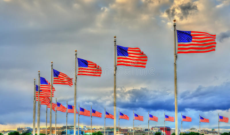 United States flags at the Washington Monument. Washington, D.C. United States royalty free stock images