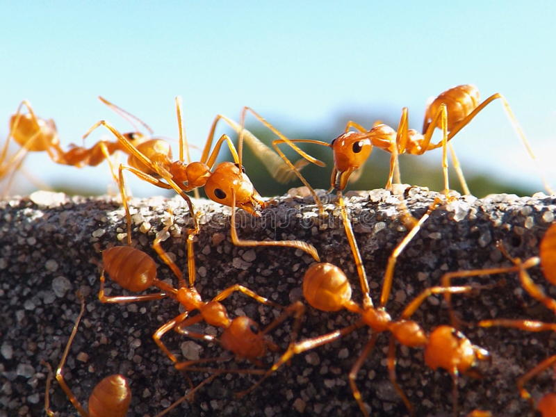 Unity ant workers stock image