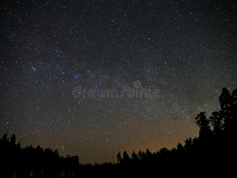 Universe stars and night forest atmosphere royalty free stock image