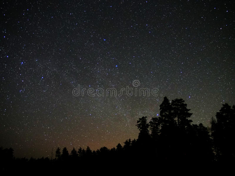 Universe stars and night forest atmosphere royalty free stock images