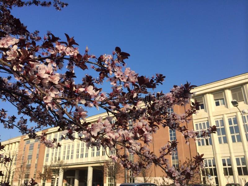 Universidad imágenes de archivo libres de regalías