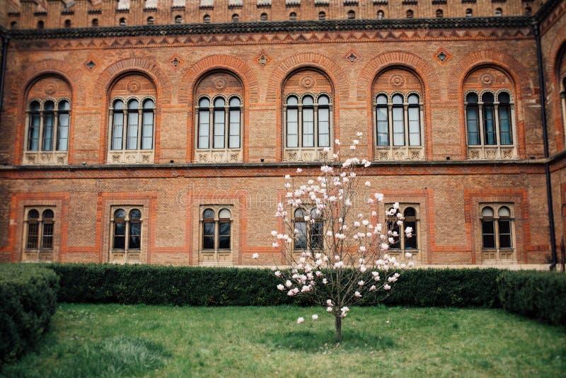 Universitätsgeländegarten mit Magnolienbaum stockfotografie