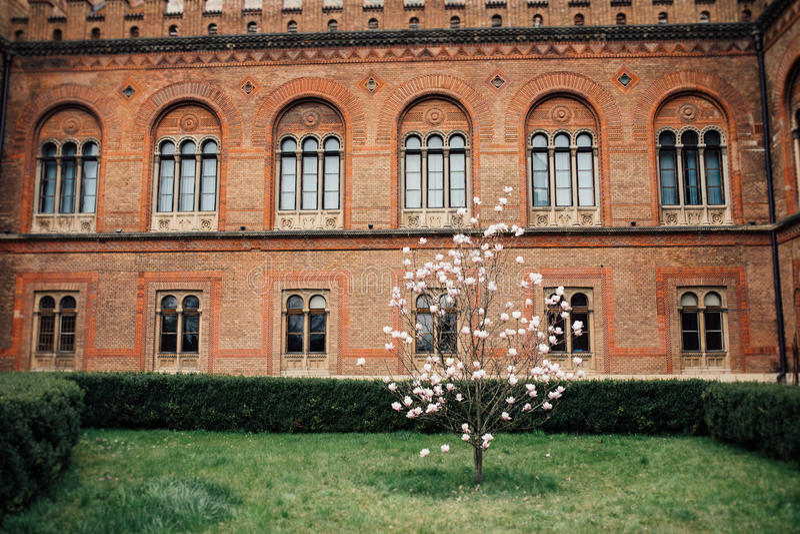 Universitetsområdeträdgård med magnoliaträdet arkivbild