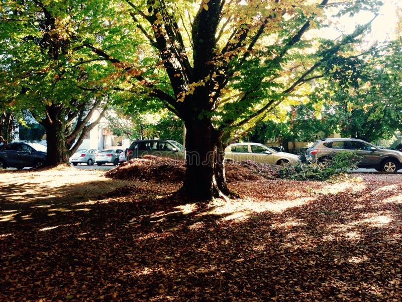 University tree royalty free stock image