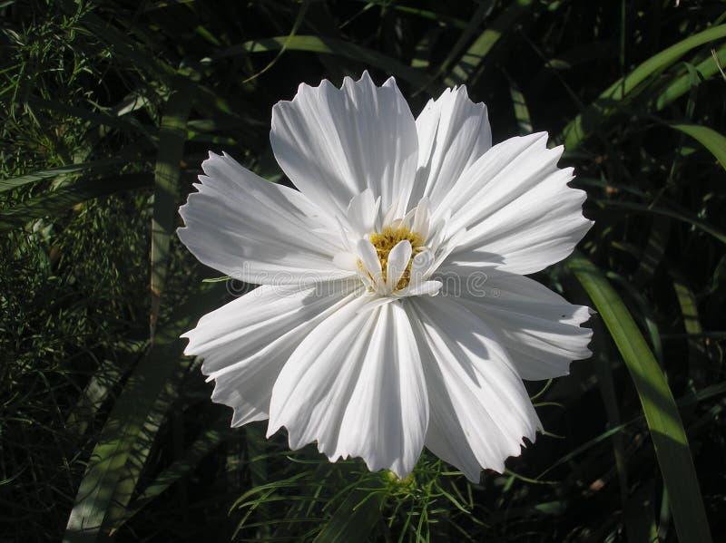 Universo bianco fotografia stock