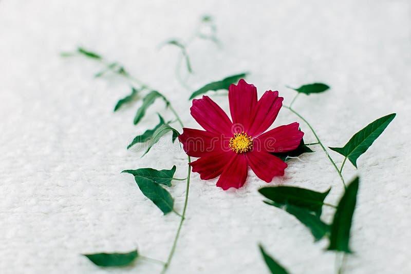 Universo rosa del fiore fotografia stock libera da diritti