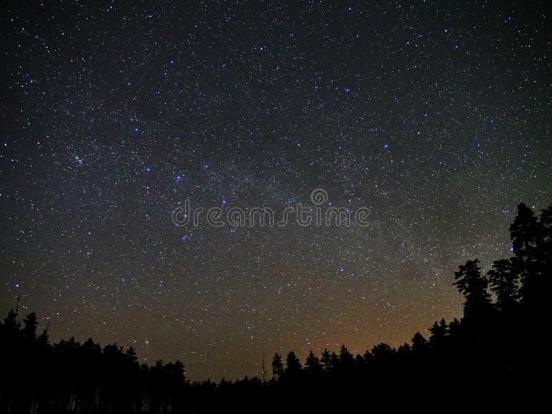 Universumstjärnor och nattskogatmosfär royaltyfri bild