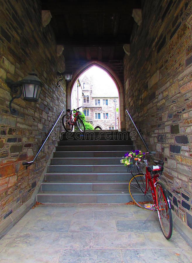Uniwersytet Princeton w Nowym - bydło obraz stock