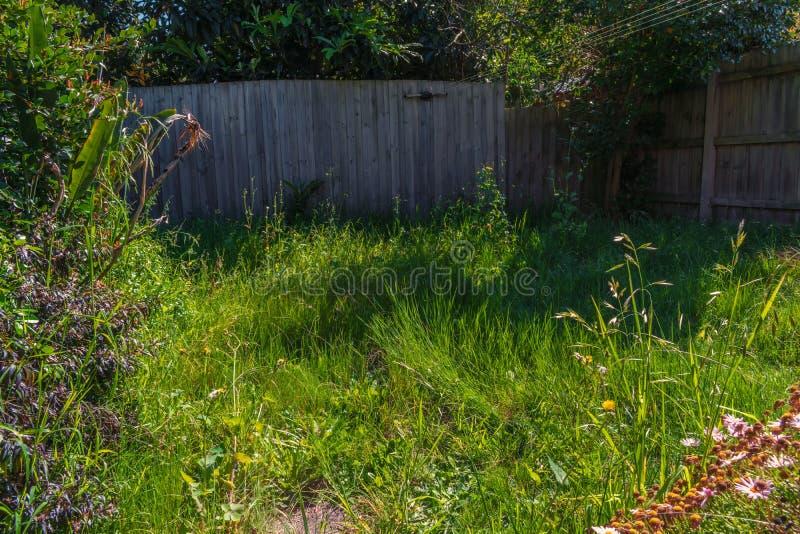 Unkempt garden 3 stock image