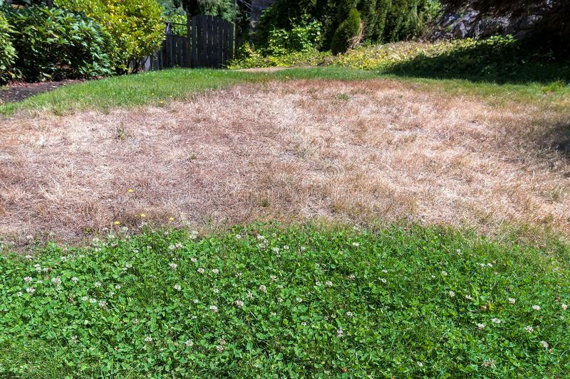Unkempt Yard with Dried Grass and Weeds. Unkempt garden yard with dried grass clover weeds in residential neighborhood stock photography
