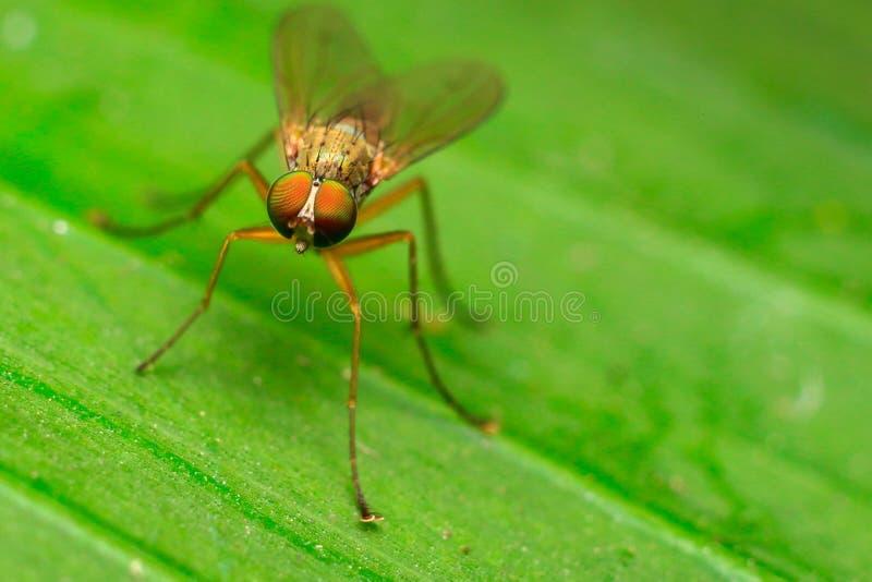 Unknow fluga arkivbilder