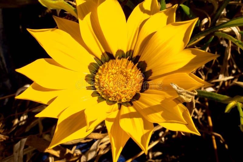 Unknow kwiat obraz royalty free