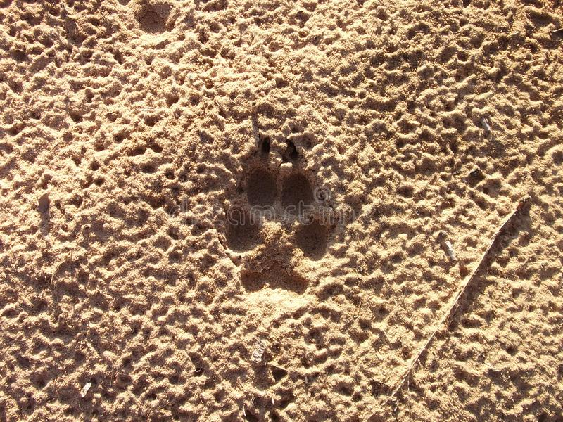 Animal, Foot prints, Sand, Wolf, Coyote, Dog stock photography