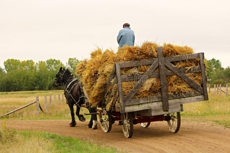 An unknown man on a wagon of hay being pulled by a horse royalty free stock photography