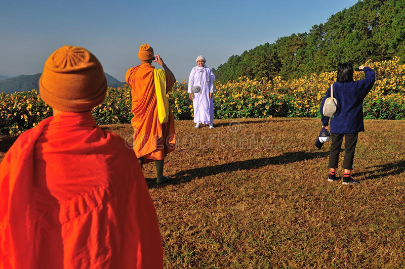 Unknown monk walking in Tung Bua Tong Mexican sunflower under blue sky royalty free stock image