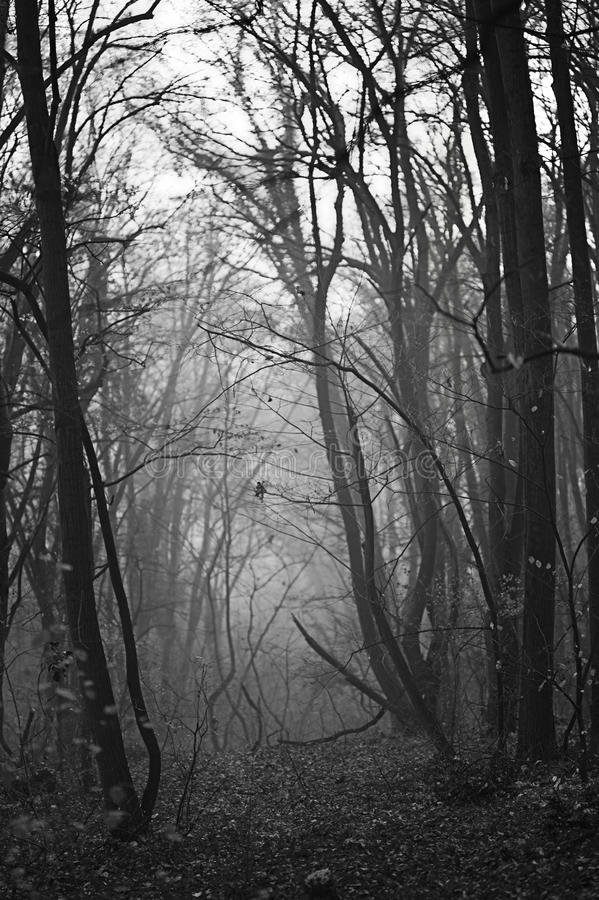 Unknown path through the life. Passage in forest, through the mist royalty free stock images