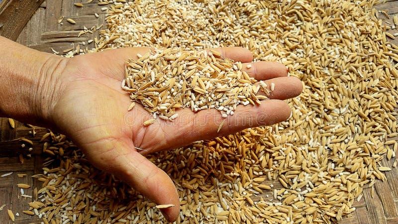 Unmilled rijst stock fotografie