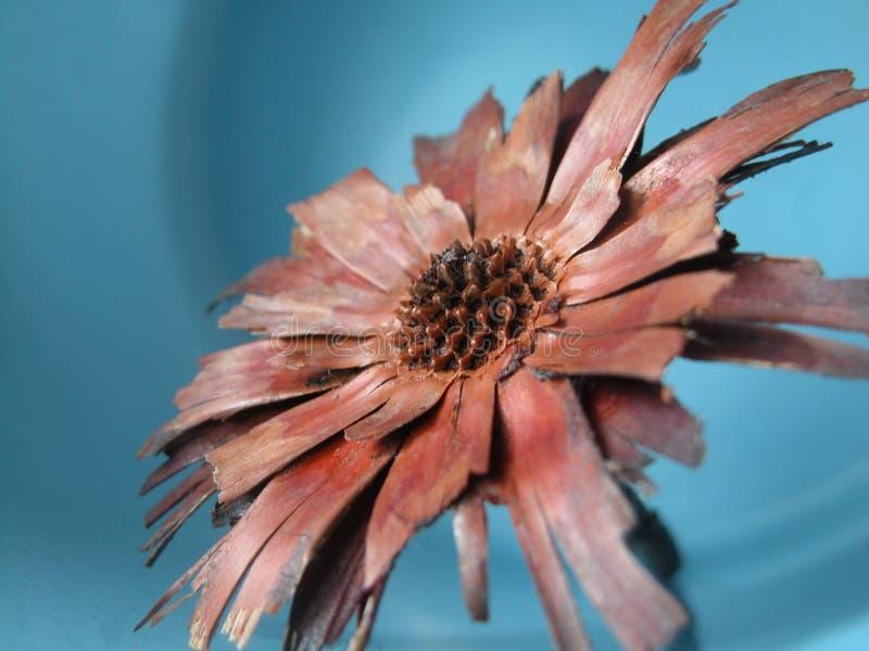 Unnatural flower stock photos