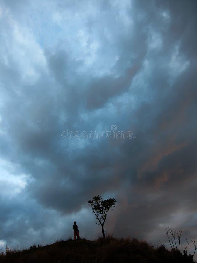 Uno con la natura, un uomo solo sta accanto ad un albero dopo il tramonto che riflette la pace interna immagini stock libere da diritti