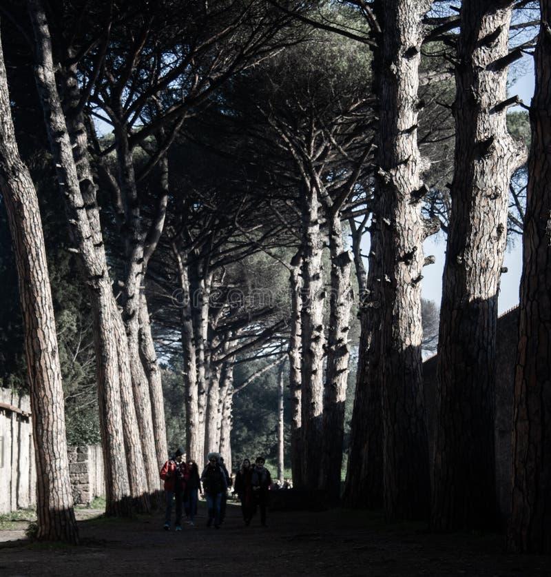 Uno de los caminos de Pompeya fotos de archivo libres de regalías