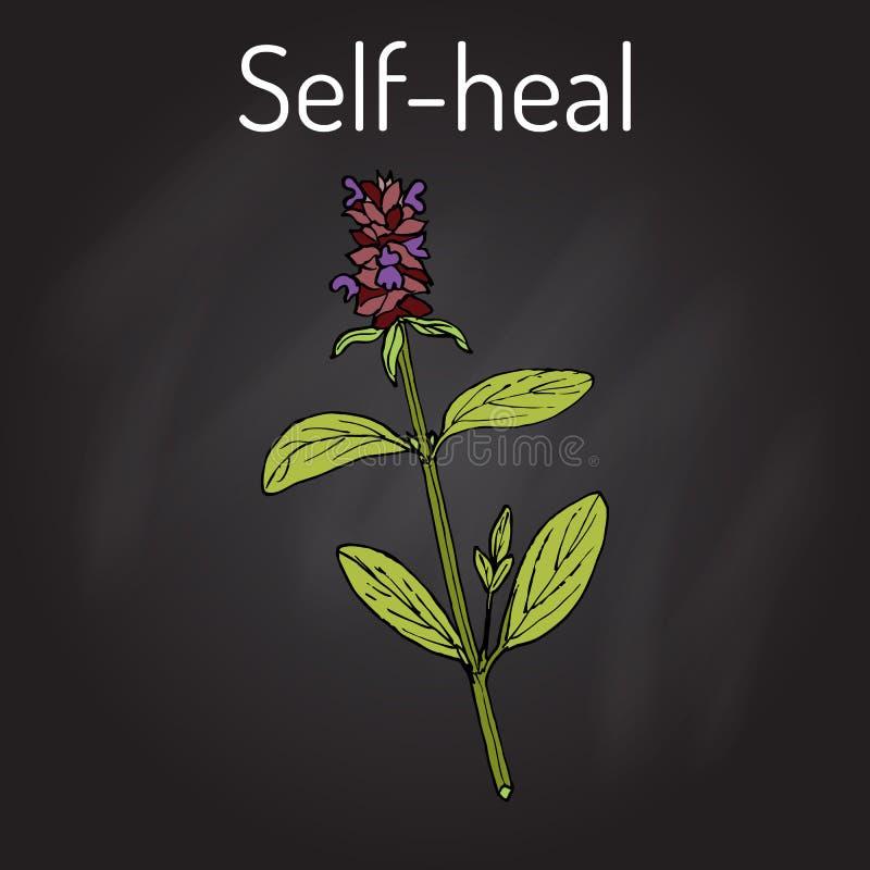 Uno mismo-cure el Prunella vulgaris, o la valeriana, planta medicinal stock de ilustración
