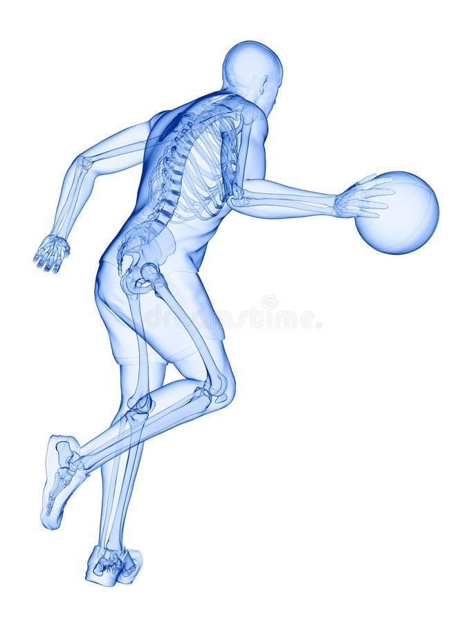 uno scheletro dei giocatori di pallacanestro illustrazione di stock