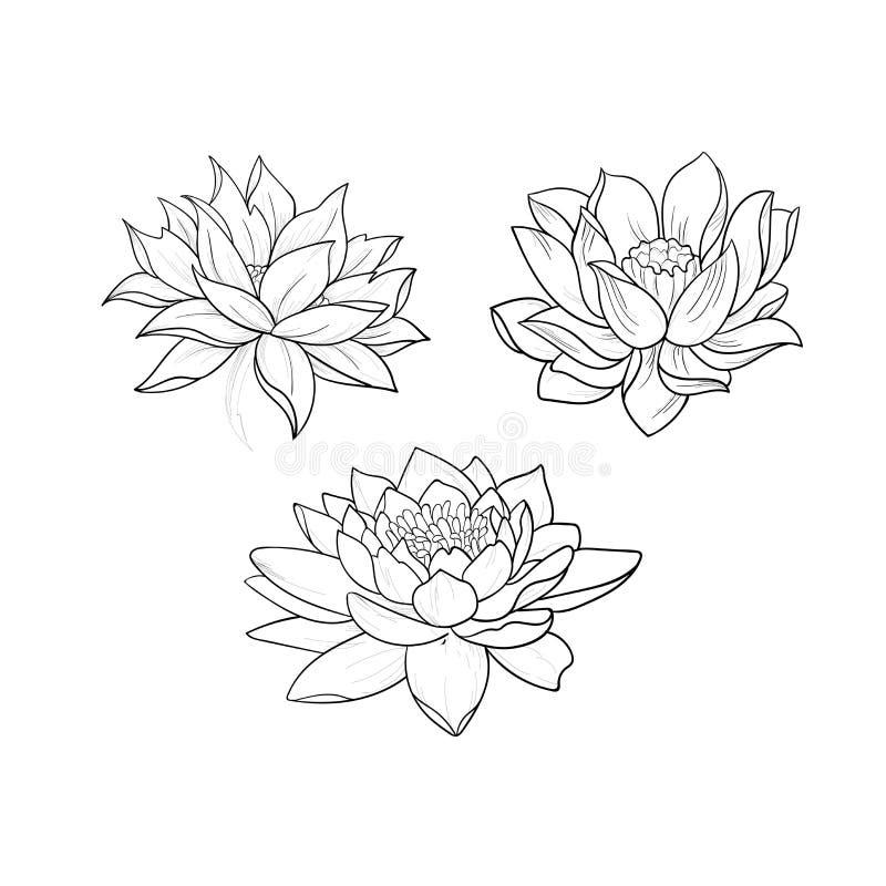 Uno schizzo di bei loti in un ornamento grazioso su un fondo bianco immagini stock libere da diritti
