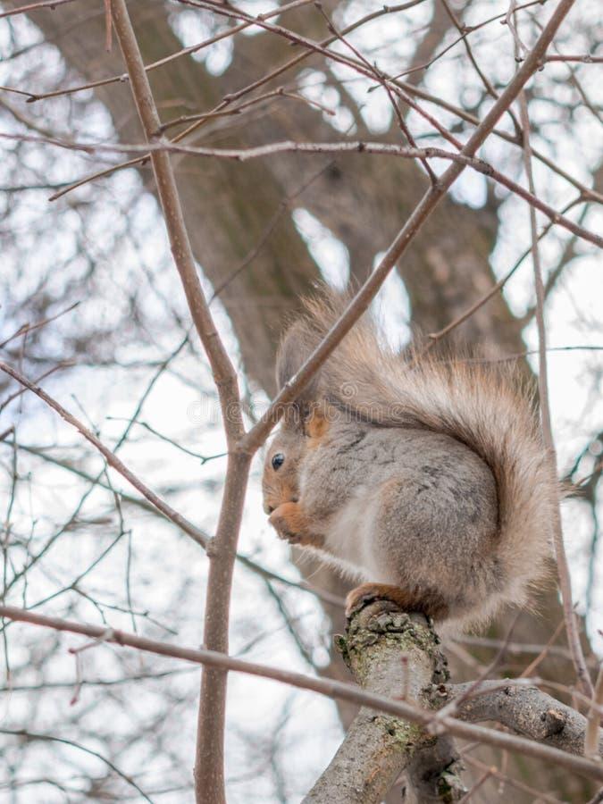 Uno scoiattolo che si siede sull'albero fotografie stock