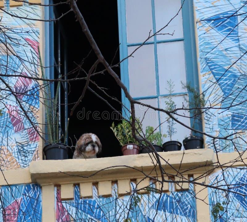 Uno sguardo canino fotografia stock