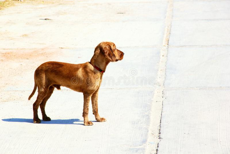 Uno sguardo del cane fotografie stock libere da diritti
