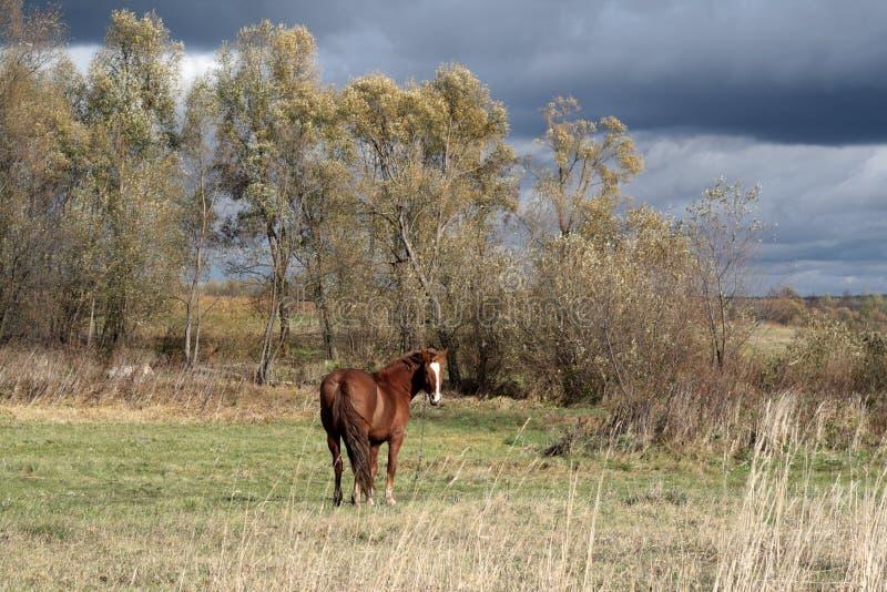 Uno sguardo del cavallo libero fotografia stock libera da diritti