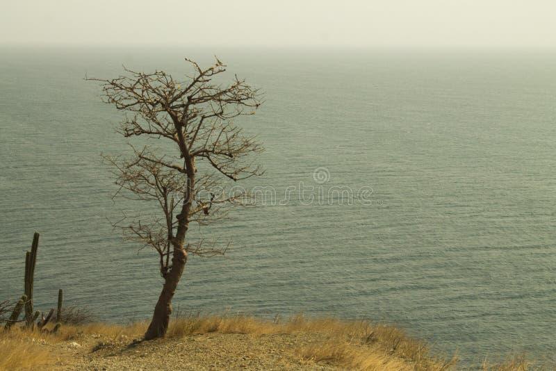 uno sguardo di solitudine all'infinito fotografie stock