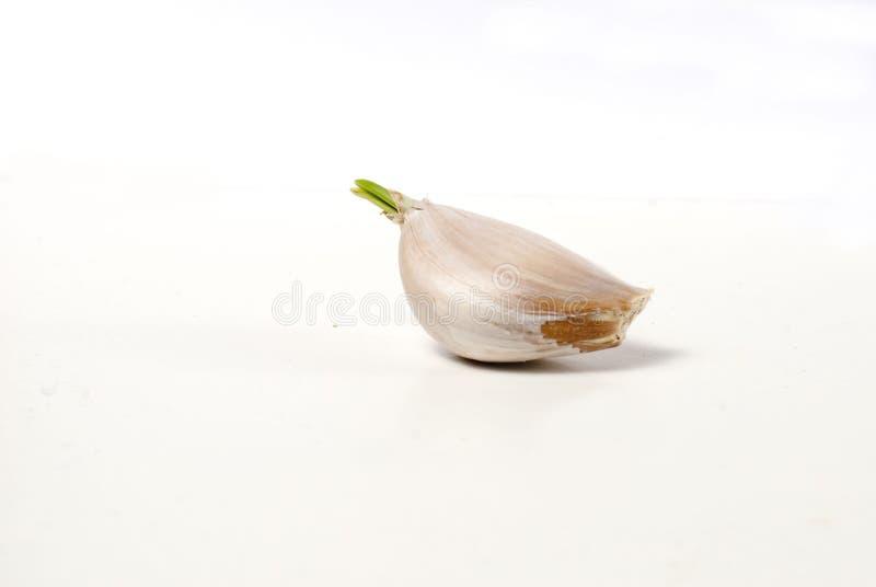 Uno spicchio d'aglio con il germoglio immagini stock libere da diritti