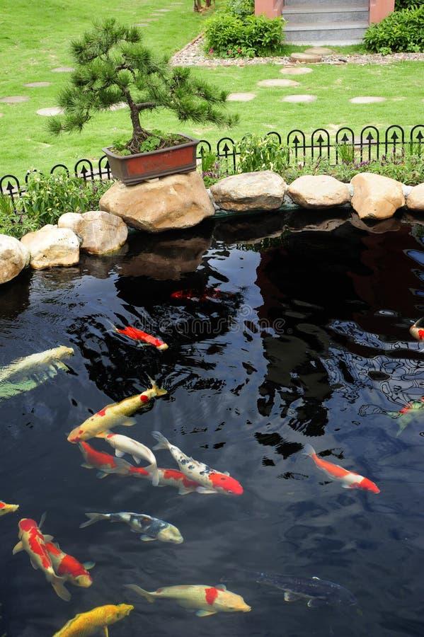 uno stagno di pesci in giardino fotografia stock