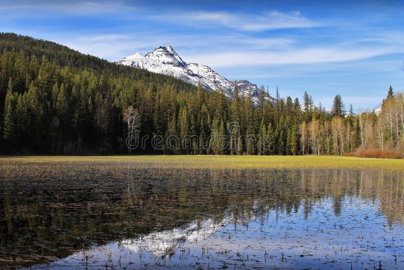 Uno stagno principalmente stagionale della colata della neve vicino al lago bowman in Glacier National Park fotografie stock libere da diritti
