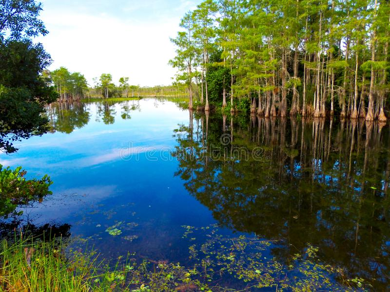 Uno stand criptato lascia il posto a una palude bagnata in questa porzione sulle Everglades della Florida immagini stock