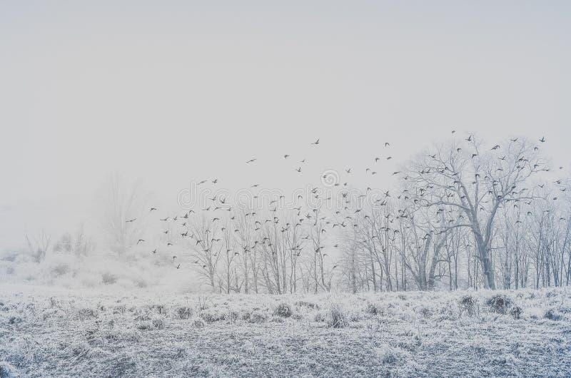 Uno stormo degli uccelli che volano sopra una terra nell'inverno immagine stock libera da diritti